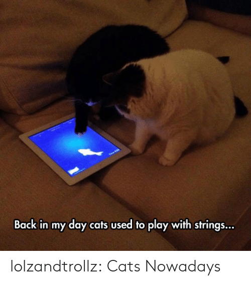 Back in My Day: Back in my day cats used to play with strings... lolzandtrollz:  Cats Nowadays