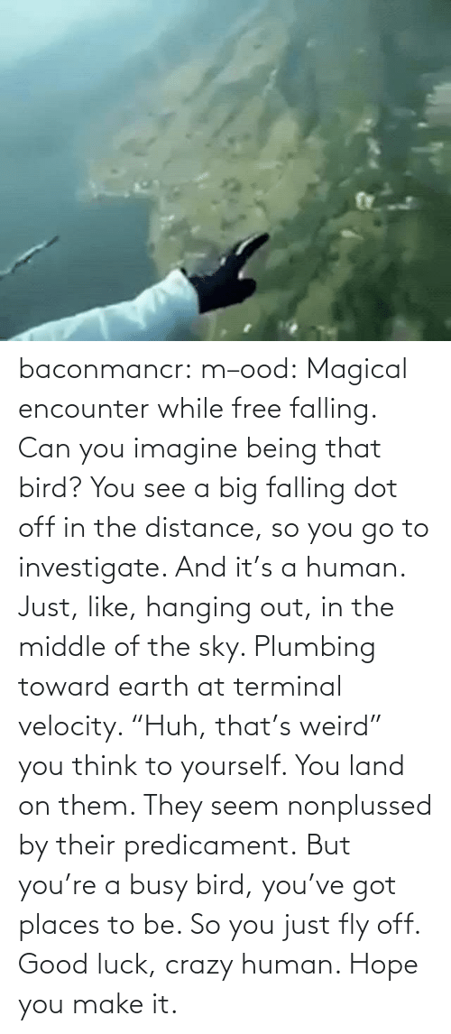 "Places: baconmancr:  m–ood: Magical encounter while free falling.  Can you imagine being that bird? You see a big falling dot off in the distance, so you go to investigate. And it's a human. Just, like, hanging out, in the middle of the sky. Plumbing toward earth at terminal velocity.  ""Huh, that's weird"" you think to yourself.  You land on them. They seem nonplussed by their predicament. But you're a busy bird, you've got places to be. So you just fly off. Good luck, crazy human. Hope you make it."