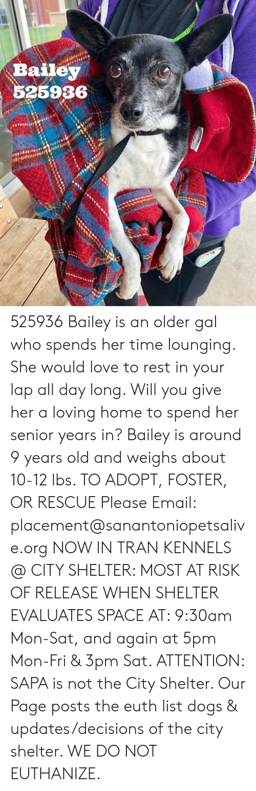 Dogs, Love, and Memes: Bailey O  525936 525936 Bailey is an older gal who spends her time lounging. She would love to rest in your lap all day long. Will you give her a loving home to spend her senior years in? Bailey is around 9 years old and weighs about 10-12 lbs.   TO ADOPT, FOSTER, OR RESCUE Please Email: placement@sanantoniopetsalive.org   NOW IN TRAN KENNELS @ CITY SHELTER: MOST AT RISK OF RELEASE WHEN SHELTER EVALUATES SPACE AT: 9:30am Mon-Sat, and again at 5pm Mon-Fri & 3pm Sat.   ATTENTION: SAPA is not the City Shelter. Our Page posts the euth list dogs & updates/decisions of the city shelter. WE DO NOT EUTHANIZE.