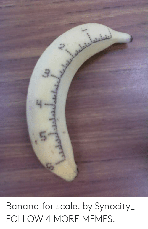 For Scale: Banana for scale. by Synocity_ FOLLOW 4 MORE MEMES.
