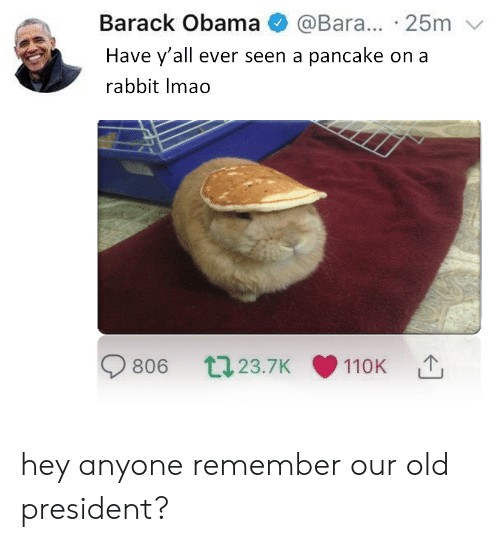 Obama, Barack Obama, and Rabbit: Barack Obama @Bara... 25m  Have y'all ever seen a pancake on a  rabbit Imao  806 t23.7K 110K hey anyone remember our old president?