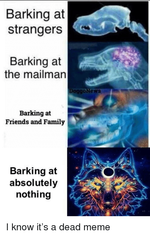Friends, Meme, and Strangers: Barking at  strangers  Barking at  the mailman  DOggoNews  Barking at  Friends and Familjy  Barking at  absolutely  nothing <p>I know it's a dead meme</p>