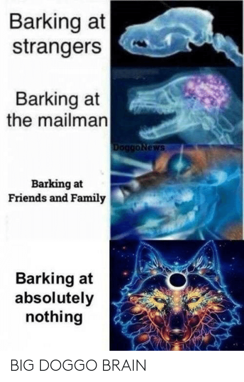 Family, Friends, and Brain: Barking at  strangers  Barking at  the mailman  DoggoNews  Barking at  Friends and Family  Barking at  absolutely  nothing BIG DOGGO BRAIN