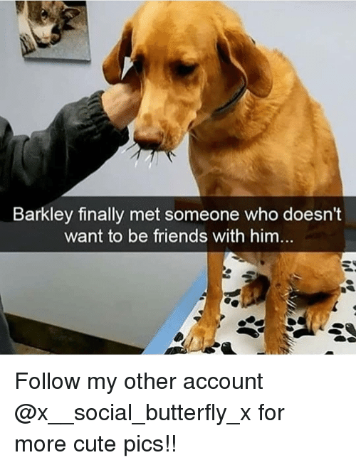 Cute, Friends, and Memes: Barkley finally met someone who doesn't  want to be friends with him Follow my other account @x__social_butterfly_x for more cute pics!!