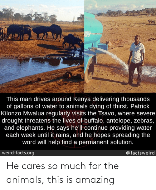 Severe: BATER  This man drives around Kenya delivering thousands  of gallons of water to animals dying of thirst. Patrick  Kilonzo Mwalua regularly visits the Tsavo, where severe  drought threatens the lives of buffalo, antelope, zebras,  and elephants. He says hell continue providing water  each week until it rains, and he hopes spreading the  word will help find a permanent solution.  weird-facts.org  @factsweird He cares so much for the animals, this is amazing