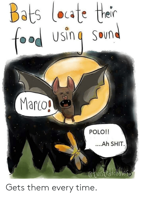 Polo: Bats loate their  foad using Smnd  Marco!  POLO!!  ..Ah SHIT  etuistedesties Gets them every time.
