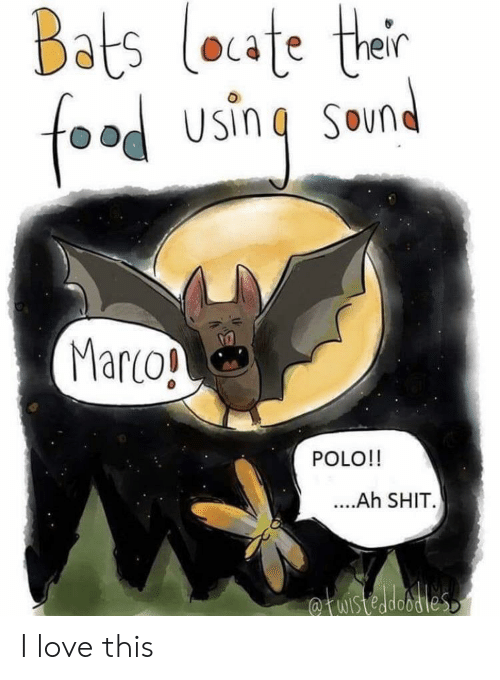 marco polo: Bats loate ther  food using  SOun  Marco!  POLO!!  ....Ah SHIT.  fuistedobdies I love this