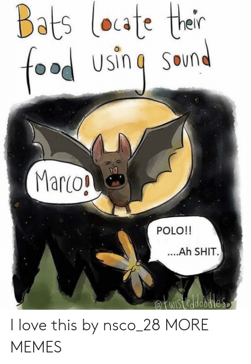 marco polo: Bats loate ther  food using  SOun  Marco!  POLO!!  ....Ah SHIT.  fuistedobdies I love this by nsco_28 MORE MEMES