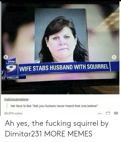 """Never Heard: Bay  NEWS  WIFE STABS HUSBAND WITH SQUIRREL  7  63 PINELLAS  maliciousmelons:  her face is like """"bet you fuckers never heard that one before""""  88.978 notes Ah yes, the fucking squirrel by Dimitar231 MORE MEMES"""
