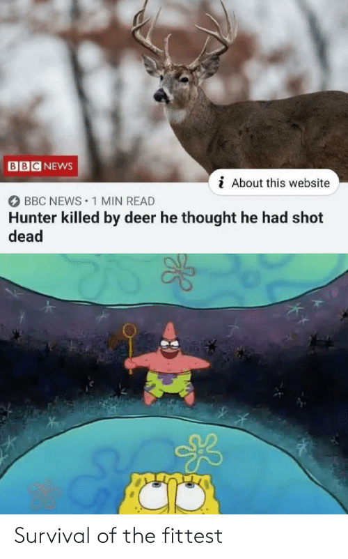 Deer: BB  NEWS  i About this website  BBC NEWS 1 MIN READ  Hunter killed by deer he thought he had shot  dead Survival of the fittest