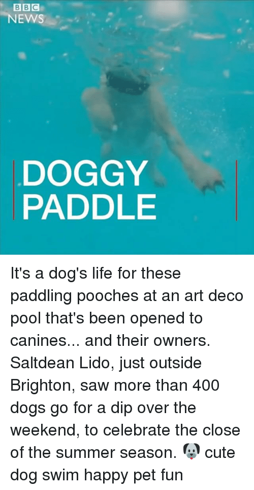 Brighton: BBC  NEWS  DOGGY  PADDLE It's a dog's life for these paddling pooches at an art deco pool that's been opened to canines... and their owners. Saltdean Lido, just outside Brighton, saw more than 400 dogs go for a dip over the weekend, to celebrate the close of the summer season. 🐶 cute dog swim happy pet fun