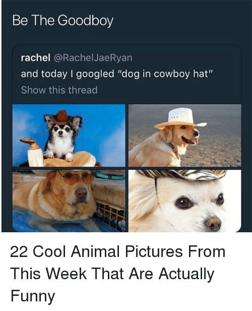 """Goodboy: Be The Goodboy  rachel @RachelJaeRyan  and today I googled """"dog in cowboy hat""""  Show this thread 22 Cool Animal Pictures From This Week That Are Actually Funny"""