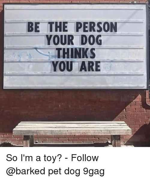 9gag, Memes, and 🤖: BE THE PERSON  YOUR DOG  THINKS  YOU ARE So I'm a toy?⠀ -⠀ Follow @barked⠀ pet dog 9gag