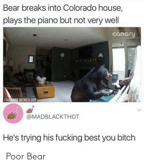 wel: Bear breaks into Colorado house,  plays the piano but not very wel  canaru  FB@DANK MEMEOLOGY  @MADBLACKTHOT  He's trying his fucking best you bitch Poor Bear