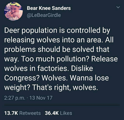 Deer, Too Much, and Bear: Bear Knee Sanders  @LeBearGirdle  Deer population is controlled by  releasing wolves into an area  problems should be solved that  way. Too much pollution? Release  wolves in factories. Dislike  Congress? Wolves. Wanna lose  weight? That's right, wolves.  2:27 p.m. 13 Nov 17  . All  13.7K Retweets 36.4K Likes
