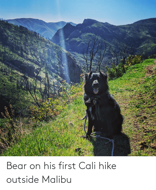 malibu: Bear on his first Cali hike outside Malibu