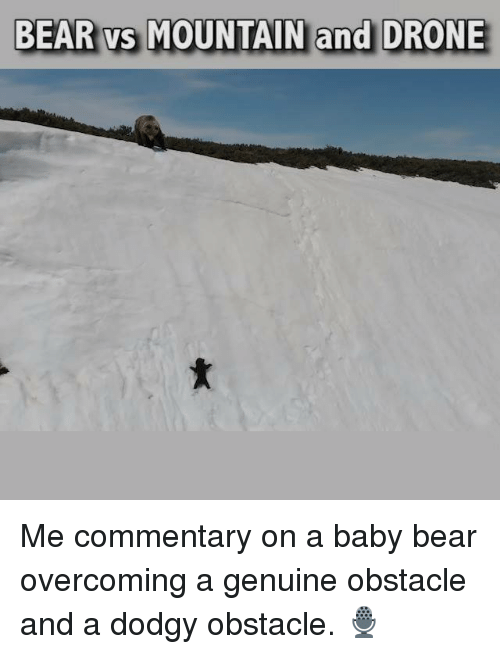 baby bear: BEAR vs MOUNTAIN and DRONE Me commentary on a baby bear overcoming a genuine obstacle and a dodgy obstacle. 🎙