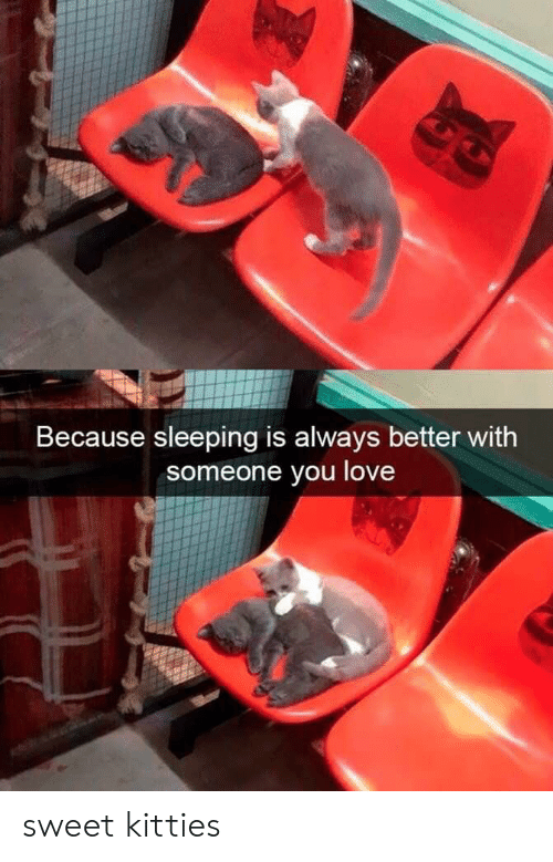 Kitties: Because sleeping is always better with  someone you love sweet kitties