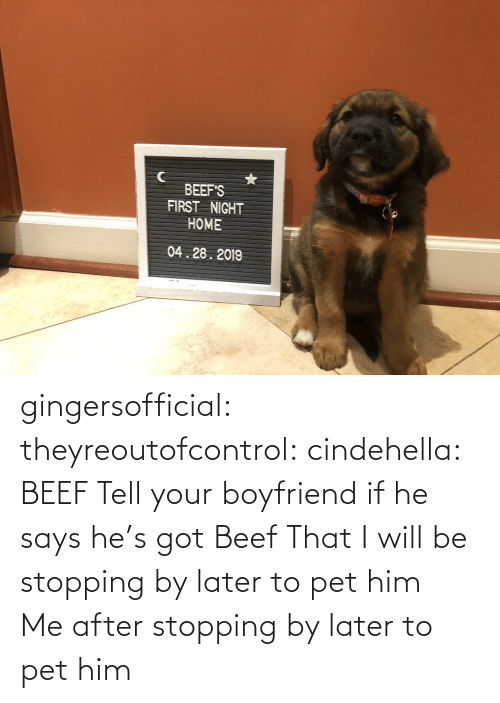 gif: BEEF'S  FIRST NIGHT  HOME  04.28.2019 gingersofficial:  theyreoutofcontrol:  cindehella: BEEF Tell your boyfriend if he says he's got Beef That I will be stopping by later to pet him     Me after stopping by later to pet him