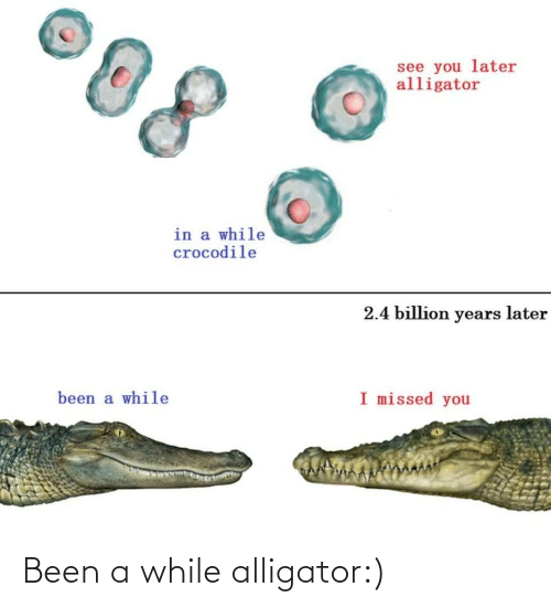Been A While: Been a while alligator:)