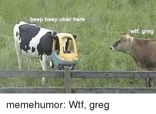 Tumblr, Uber, and Wtf: beep beep uber here  wtf, greg memehumor:  Wtf, greg