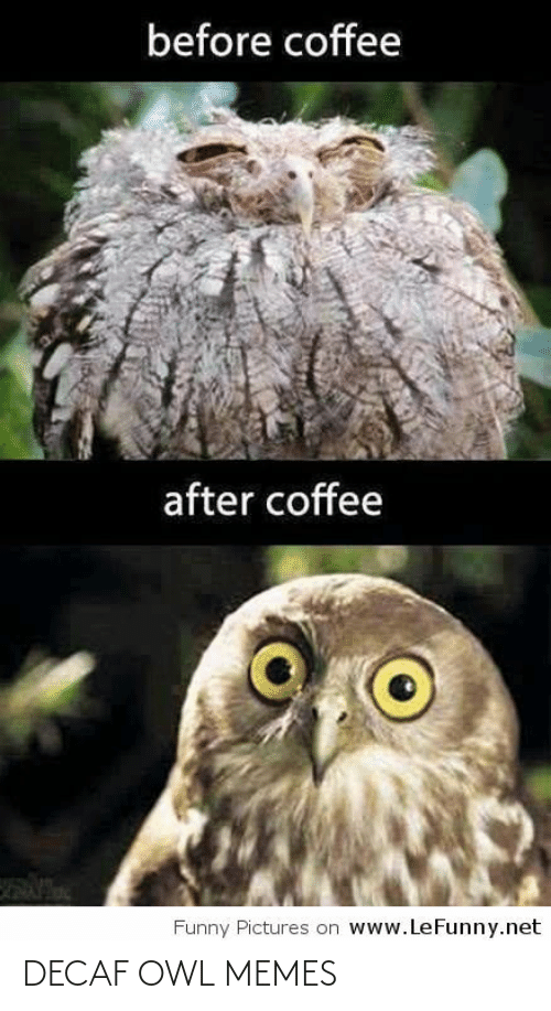 funny pictures: before coffee  after coffee  www.LeFunny.net  Funny Pictures on DECAF OWL MEMES