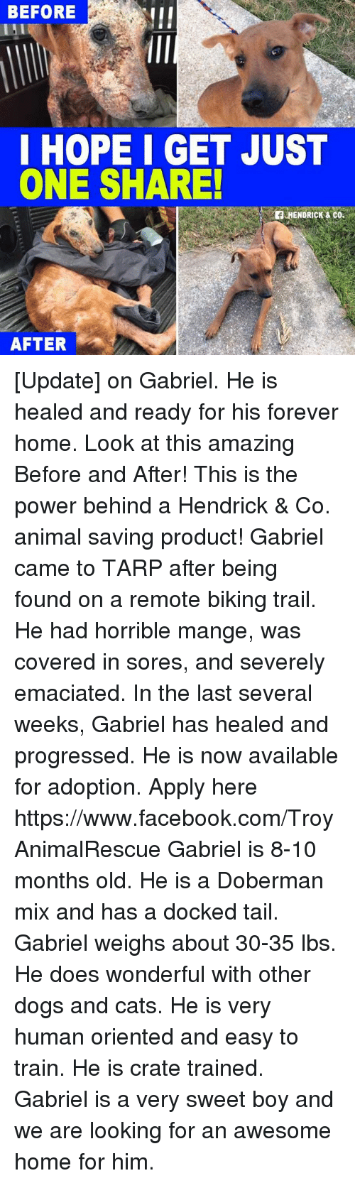 dog-and-cats: BEFORE  I HOPE I GET JUST  ONE SHARE!  HENDRICK & Co.  AFTER [Update] on Gabriel.  He is healed and ready for his forever home. Look at this amazing Before and After! This is the power behind a Hendrick & Co. animal saving product!   Gabriel came to TARP after being found on a remote biking trail. He had horrible mange, was covered in sores, and severely emaciated. In the last several weeks, Gabriel has healed and progressed.  He is now available for adoption. Apply here https://www.facebook.com/TroyAnimalRescue Gabriel is 8-10 months old. He is a Doberman mix and has a docked tail. Gabriel weighs about 30-35 lbs. He does wonderful with other dogs and cats. He is very human oriented and easy to train. He is crate trained. Gabriel is a very sweet boy and we are looking for an awesome home for him.