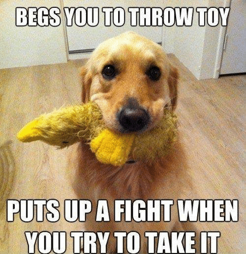 Dank, Fight, and 🤖: BEGS YOU TO THROW  TOY  PUTS UP A FIGHT WHEN  YOUTRY TO TAKE IT