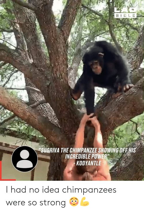 """Dank, Power, and Strong: BELE  SUGRIVA THE CHIMPANZEE SHOWING OFE HIS  INCREDIBLE POWER""""  KODYANTLE I had no idea chimpanzees were so strong 😳💪"""