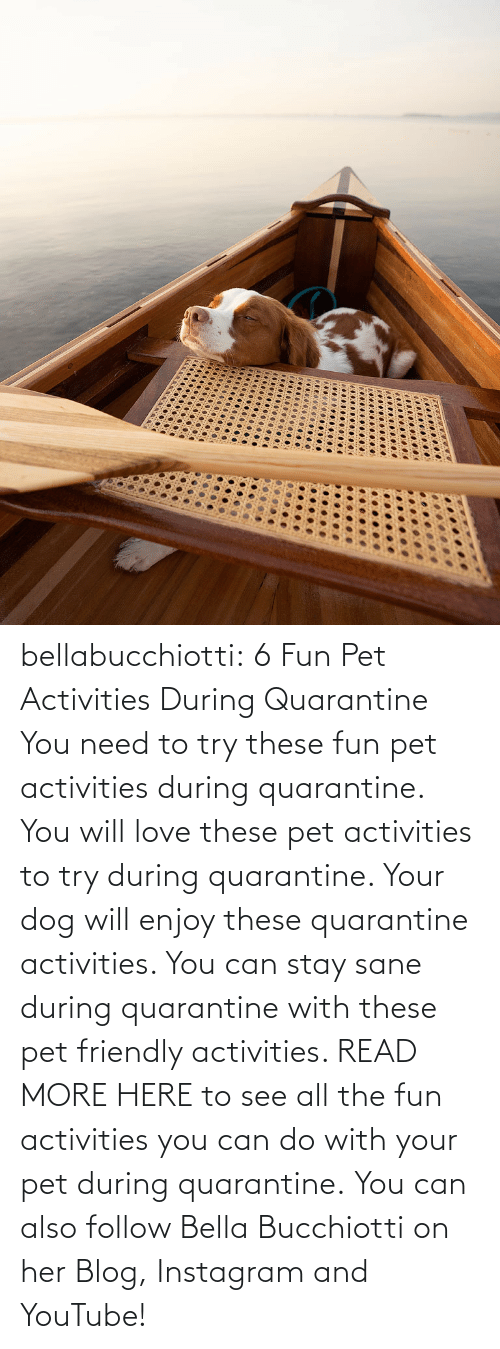 You Can: bellabucchiotti:  6 Fun Pet Activities During Quarantine    You need to try  these fun pet activities during quarantine. You will love these pet  activities to try during quarantine. Your dog will enjoy these  quarantine activities. You can stay sane during quarantine with these  pet friendly activities.   READ MORE HERE to see all the fun activities you can do with your pet during quarantine.  You can also follow Bella Bucchiotti on her Blog, Instagram and YouTube!