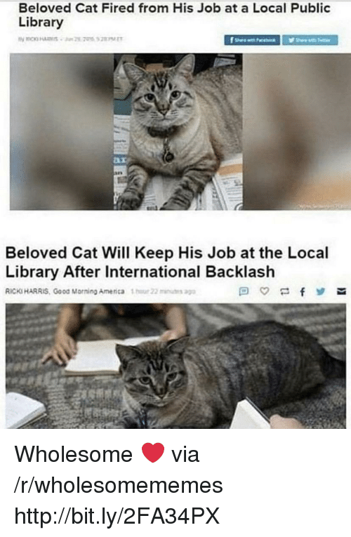 Good Morning, Good, and Http: Beloved Cat Fired from His Job at a Local Public  Library  Beloved Cat Will Keep His Job at the Local  Library After International Backlash  RICKS HARRIS, Good Morning Amenca 1  22u Wholesome ❤️ via /r/wholesomememes http://bit.ly/2FA34PX