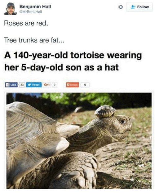 Trunks: Benjamin Hall  @MrBenLHall  Follow  Roses are red,  Tree trunks are fat.  A 140-year-old tortoise wearing  er 5-day-old son as a hat