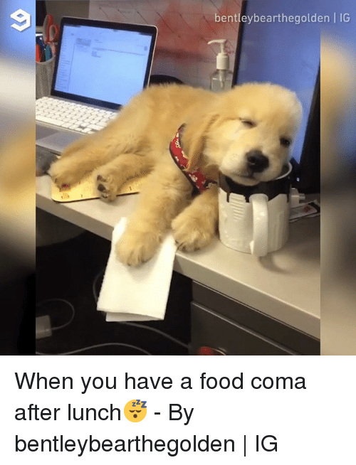 25 Best Memes About Food Coma Food Coma Memes