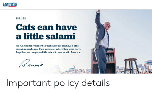 in america: Bernie  ISSUES  Cats can have  a little salami  I'm running for President so that every cat can have a little  samali, regard less of their income or where they were born.  Together, we can give a little salami to every cat in America.  ernie  crnie  mie  Be de  AK Important policy details