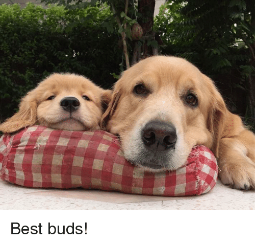 Best, Buds, and  Best Buds