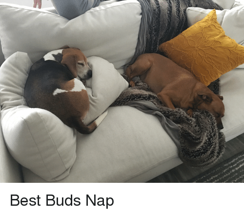 Best, Nap, and Buds