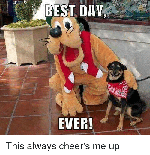 Cheers Me Up: BEST DAV  EVER! This always cheer's me up.