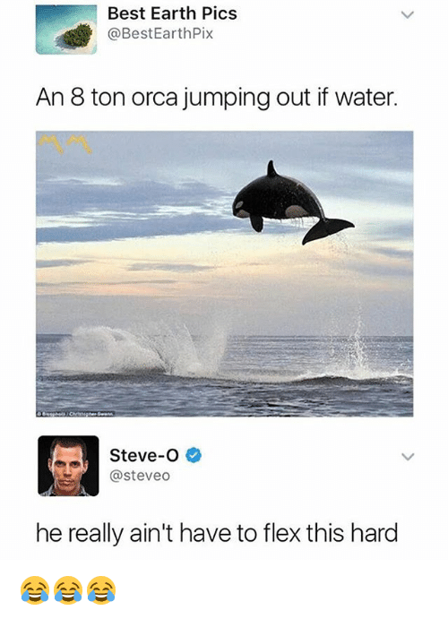 Flexing, Best, and Earth: Best Earth Pics  @BestEarthPix  An 8 ton orca jumping out if water.  Steve-O  @steveo  he really ain't have to flex this hard 😂😂😂