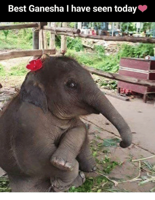 Memes, Best, and Today: Best Ganesha I have seen today