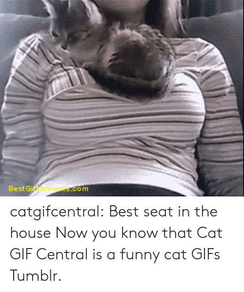 funny cat: Best Gif Moments.com catgifcentral:  Best seat in the houseNow you know that Cat GIF Central is a funny cat GIFs Tumblr.