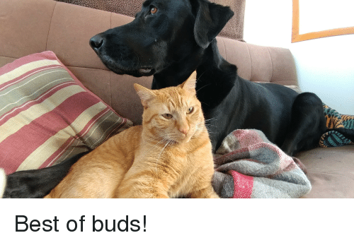 Best, Best Of, and Buds