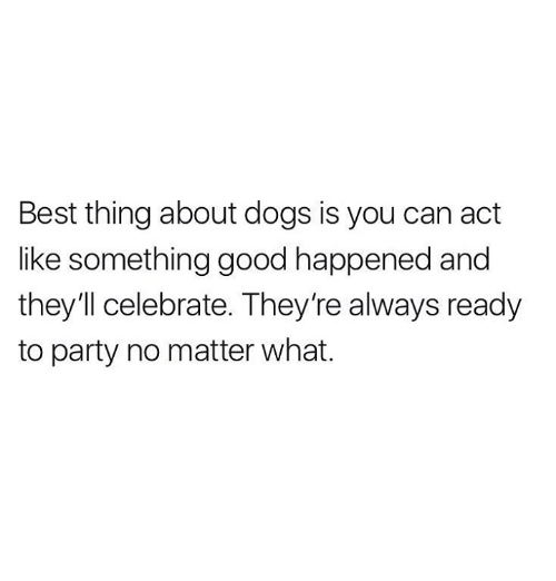 Dogs, Party, and Relationships: Best thing about dogs is you can act  like something good happened and  they'll celebrate. They're always ready  to party no matter what.