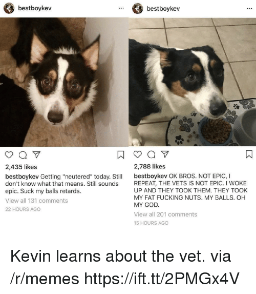 "Fucking, God, and Memes: bestboykev  bestboykev  2,435 likes  2,788 likes  bestboykev Getting ""neutered"" today. Stil bestboykev OK BROS. NOT EPIC, I  don't know what that means. Still sounds  epic. Suck my balls retards.  View all 131 comments  22 HOURS AGO  REPEAT, THE VETS IS NOT EPIC. I WOKE  UP AND THEY TOOK THEM. THEY TOOK  MY FAT FUCKING NUTS. MY BALLS. OH  MY GOD  View all 201 comments  15 HOURS AGO Kevin learns about the vet. via /r/memes https://ift.tt/2PMGx4V"