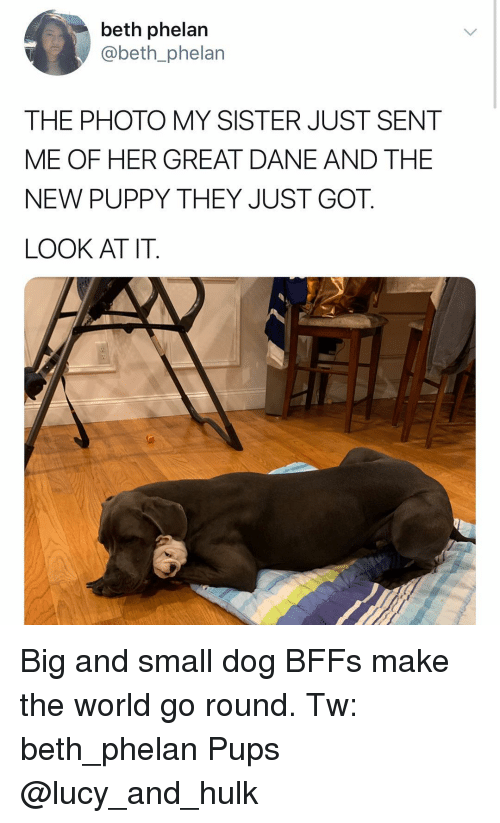 Dane: beth phelan  @beth_phelan  THE PHOTO MY SISTER JUST SENT  ME OF HER GREAT DANE AND THE  NEW PUPPY THEY JUST GOT.  LOOK AT IT. Big and small dog BFFs make the world go round. Tw: beth_phelan Pups @lucy_and_hulk