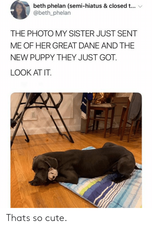 Dane: beth phelan (semi-hiatus & closed t...  @beth_phelan  THE PHOTO MY SISTER JUST SENT  ME OF HER GREAT DANE AND THE  NEW PUPPY THEY JUST GOT  LOOK AT IT. Thats so cute.