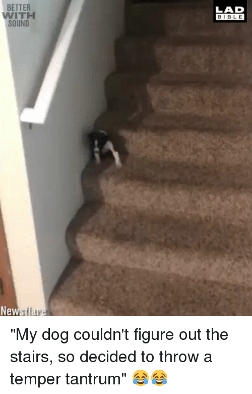 """Memes, Bible, and 🤖: BETTER  WITH  SOUND  LAD  BIBLE  New """"My dog couldn't figure out the stairs, so decided to throw a temper tantrum"""" 😂😂"""