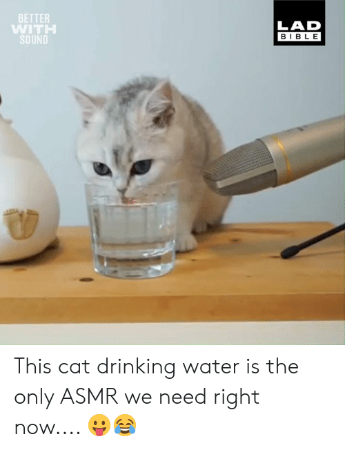 Dank, Drinking, and Bible: BETTER  WITH  SOUND  LAD  BIBLE This cat drinking water is the only ASMR we need right now.... 😛😂