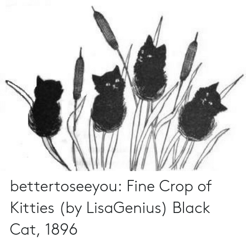Kitties: bettertoseeyou:  Fine Crop of Kitties (by LisaGenius) Black Cat, 1896