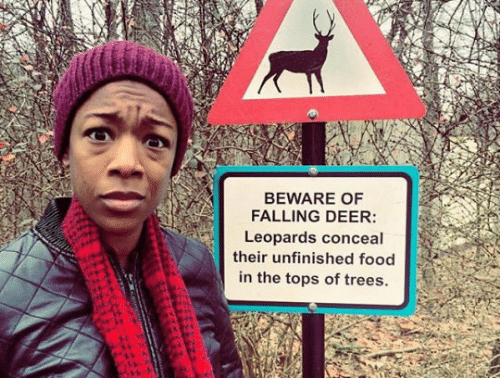Deer: BEWARE OF  FALLING DEER:  Leopards conceal  their unfinished food  in the tops of trees.