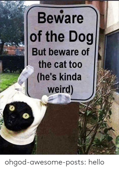 beware: Beware  of the Dog  But beware of  the cat too  (he's kinda  weird) ohgod-awesome-posts: hello